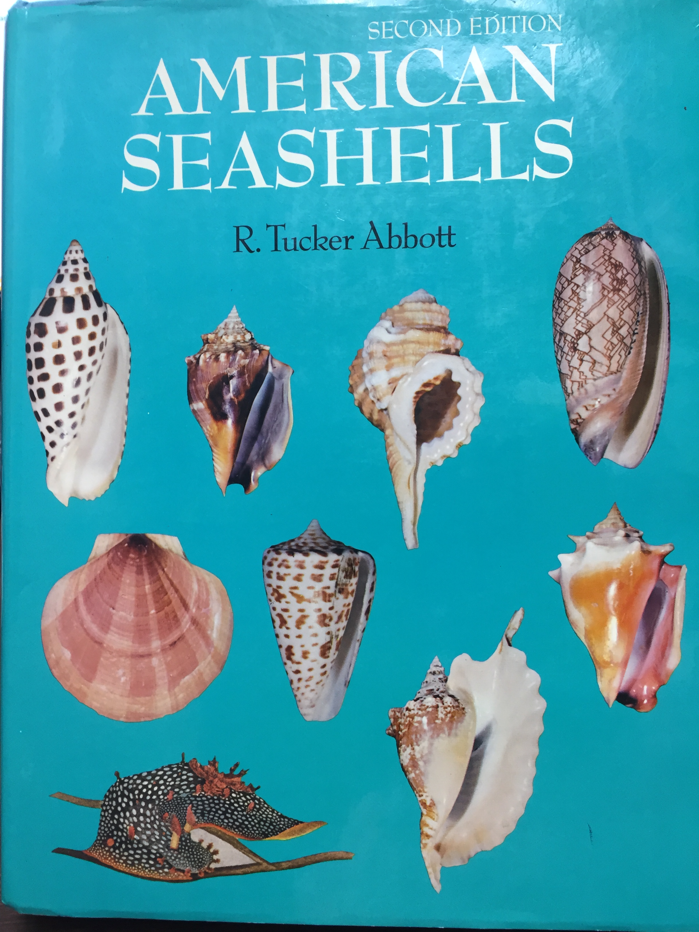Image for American Seashells, Second Edition